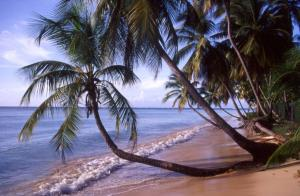 2004-04 Tobago